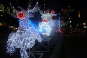 Holiday Lights in Yonge & Dundas