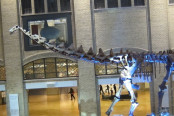 Inside the Royal Ontario Museum