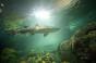 Ripley's Aquarium shark
