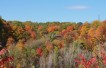 Fall Leaves at Evergreen Brick Works