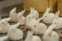 Kwan Bunny Dumplings