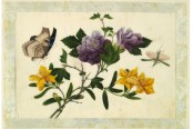 ROM made in China botanic painting