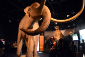 science centre mammoths (41)